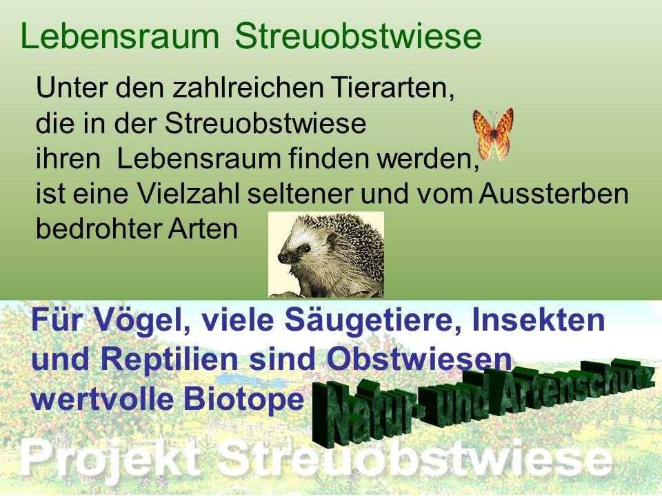 Lebensraum Streuobstwiese Unter den zahlreichen Tierarten, die in der Streuobstwiese ihren Lebensraum finden werden, ist eine Vielzahl seltener und vo