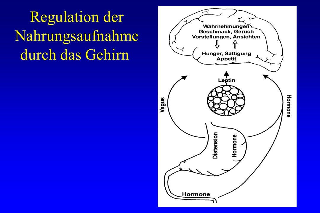 Regulation der Nahrungsaufnahme durch das Gehirn