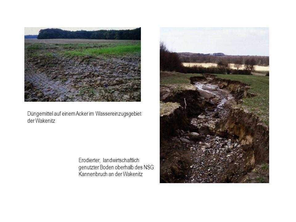 Düngemittel auf einem Acker im Wassereinzugsgebiet der Wakenitz Erodierter, landwirtschaftlich genutzter Boden oberhalb des NSG Kannenbruch an der Wak