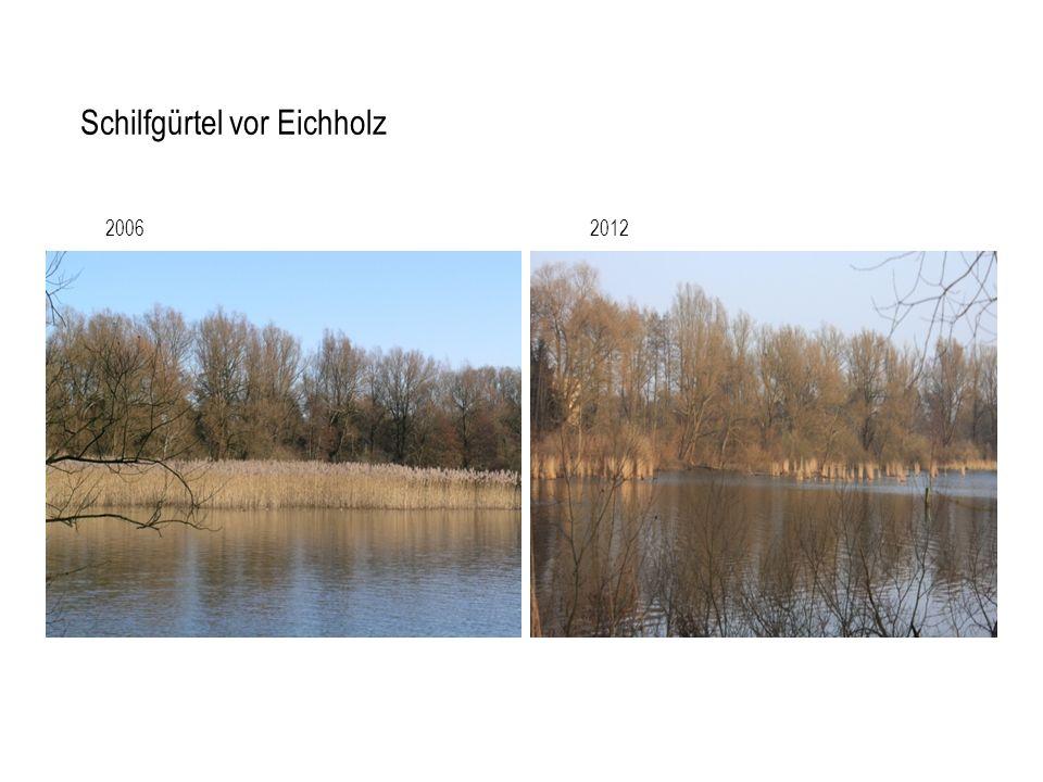 Schilfgürtel vor Eichholz 20062012
