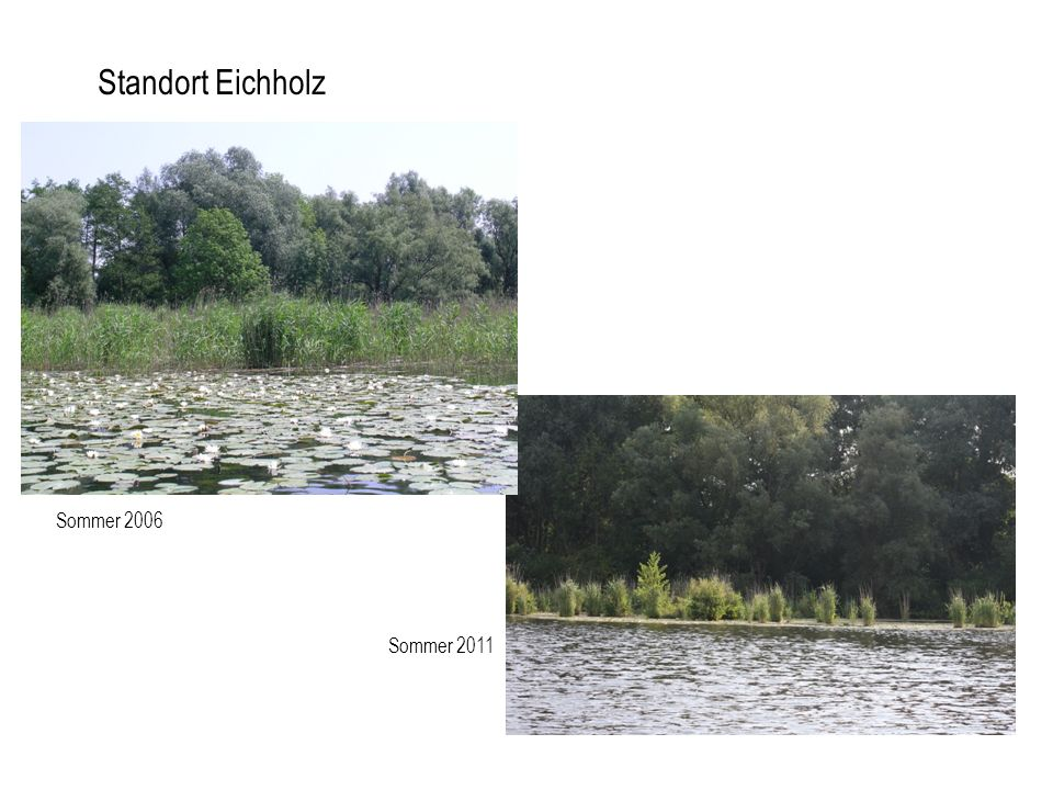 Standort Eichholz Sommer 2006 Sommer 2011