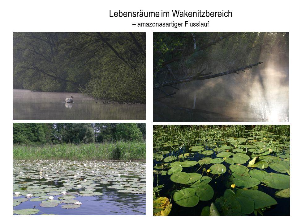 Lebensräume im Wakenitzbereich – amazonasartiger Flusslauf