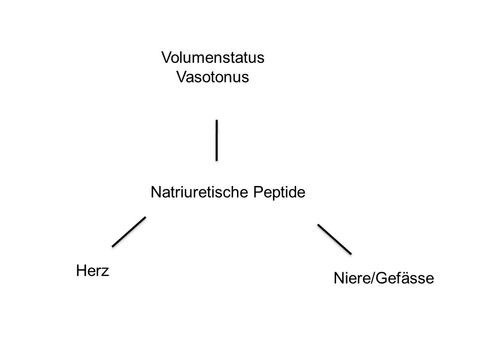 NT-proBNP und Mitral Insuffizienz Detaint et al Circulation 2005;111:2391-2397