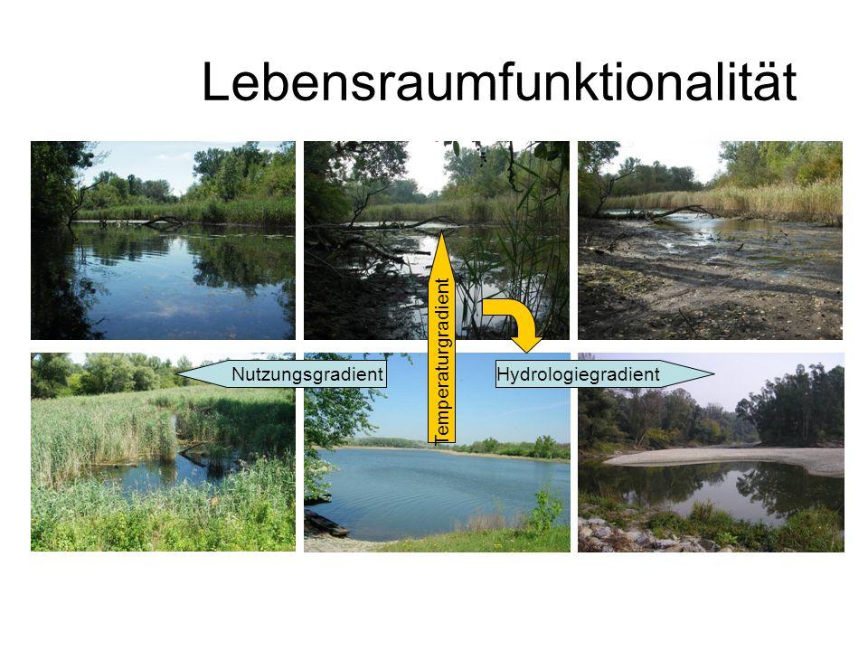 Lebensraumfunktionalität HydrologiegradientNutzungsgradient Temperaturgradient