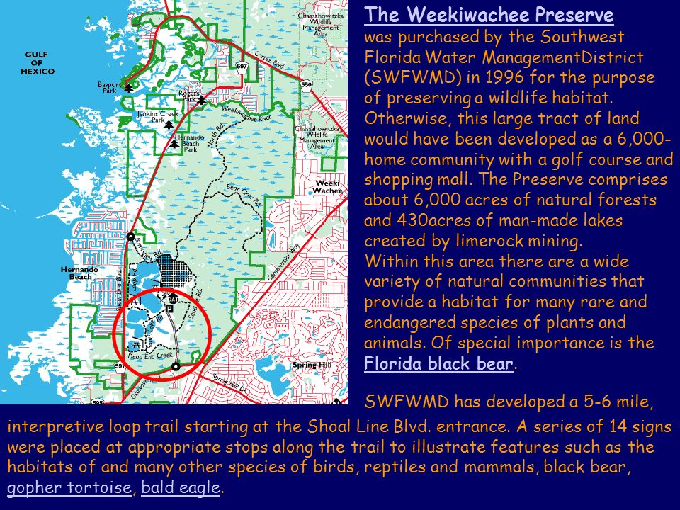 The Weekiwachee Preserve was purchased by the Southwest Florida Water ManagementDistrict (SWFWMD) in 1996 for the purpose of preserving a wildlife habitat.
