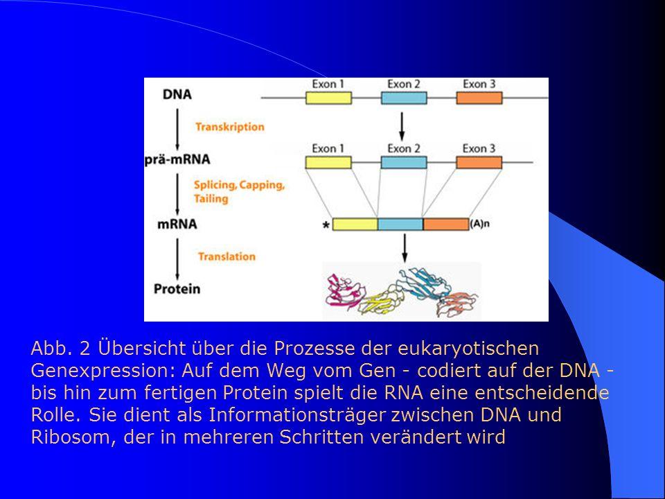 Abb. 2 Übersicht über die Prozesse der eukaryotischen Genexpression: Auf dem Weg vom Gen - codiert auf der DNA - bis hin zum fertigen Protein spielt d