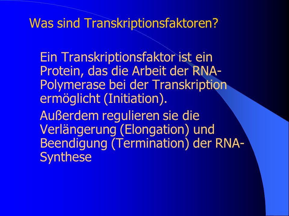 Was sind Transkriptionsfaktoren? Ein Transkriptionsfaktor ist ein Protein, das die Arbeit der RNA- Polymerase bei der Transkription ermöglicht (Initia