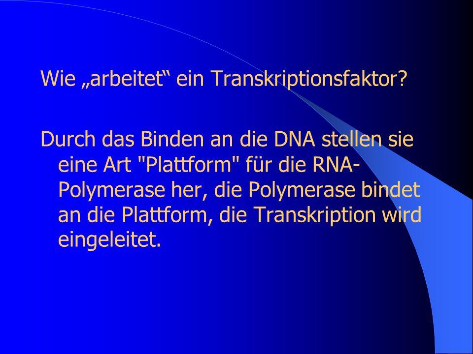 Wie arbeitet ein Transkriptionsfaktor? Durch das Binden an die DNA stellen sie eine Art