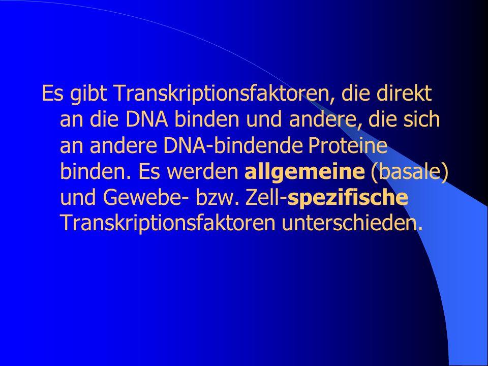 Es gibt Transkriptionsfaktoren, die direkt an die DNA binden und andere, die sich an andere DNA-bindende Proteine binden. Es werden allgemeine (basale