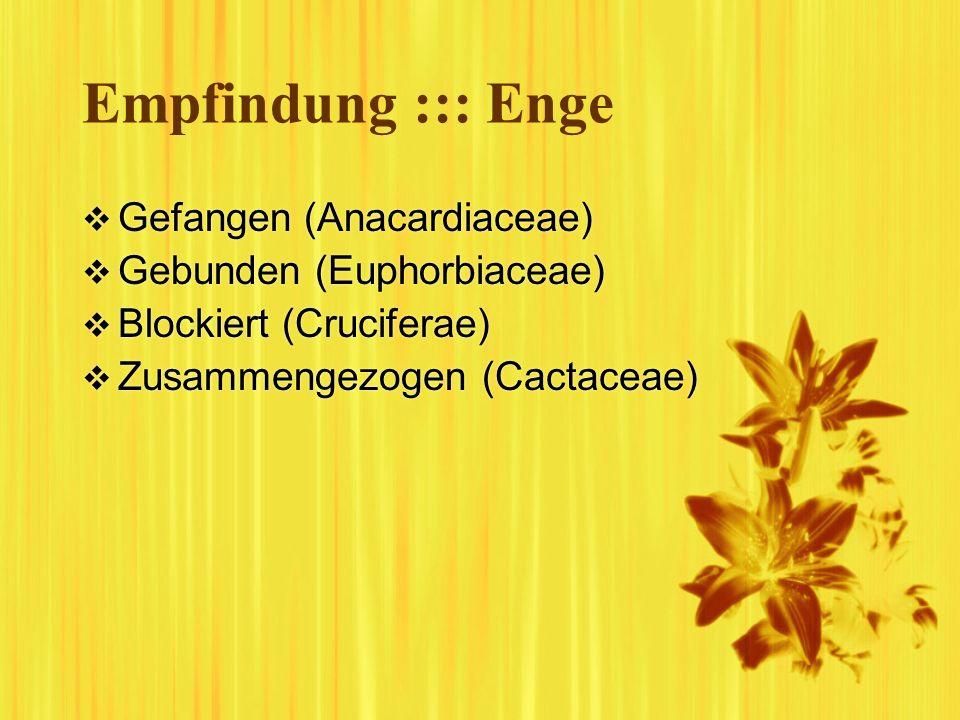 Empfindung ::: Enge Gefangen (Anacardiaceae) Gebunden (Euphorbiaceae) Blockiert (Cruciferae) Zusammengezogen (Cactaceae) Gefangen (Anacardiaceae) Gebu
