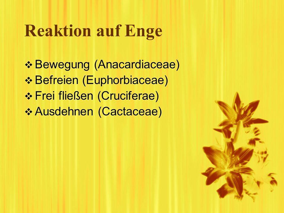 Reaktion auf Enge Bewegung (Anacardiaceae) Befreien (Euphorbiaceae) Frei fließen (Cruciferae) Ausdehnen (Cactaceae) Bewegung (Anacardiaceae) Befreien