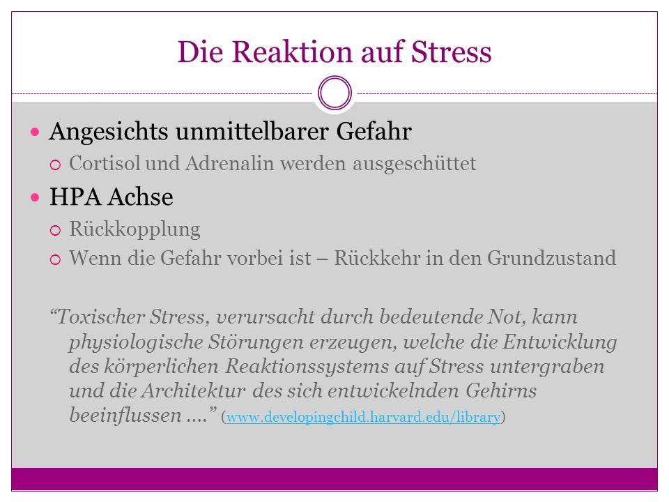 Die Reaktion auf Stress Angesichts unmittelbarer Gefahr Cortisol und Adrenalin werden ausgeschüttet HPA Achse Rückkopplung Wenn die Gefahr vorbei ist