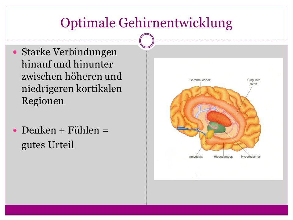 Optimale Gehirnentwicklung Starke Verbindungen hinauf und hinunter zwischen höheren und niedrigeren kortikalen Regionen Denken + Fühlen = gutes Urteil