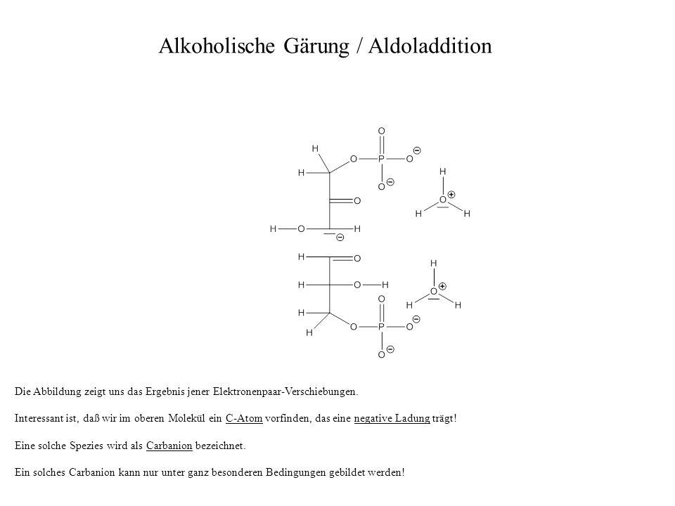 Alkoholische Gärung / Aldoladdition Die Abbildung zeigt uns das Ergebnis jener Elektronenpaar-Verschiebungen. Interessant ist, daß wir im oberen Molek