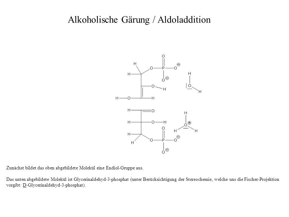 Zunächst bildet das oben abgebildete Molekül eine Endiol-Gruppe aus. Das unten abgebildete Molekül ist Glycerinaldehyd-3-phosphat (unter Berücksichtig