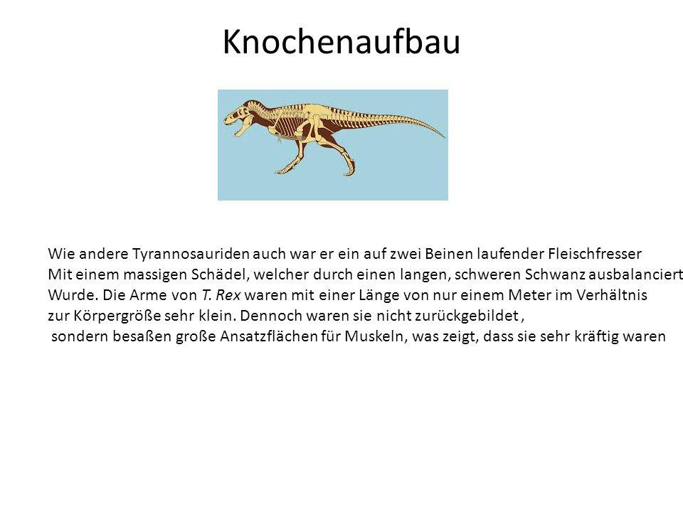 Knochenaufbau Wie andere Tyrannosauriden auch war er ein auf zwei Beinen laufender Fleischfresser Mit einem massigen Schädel, welcher durch einen lang