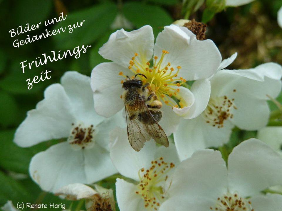 Bilder und Gedanken zur Frühlings- zeit