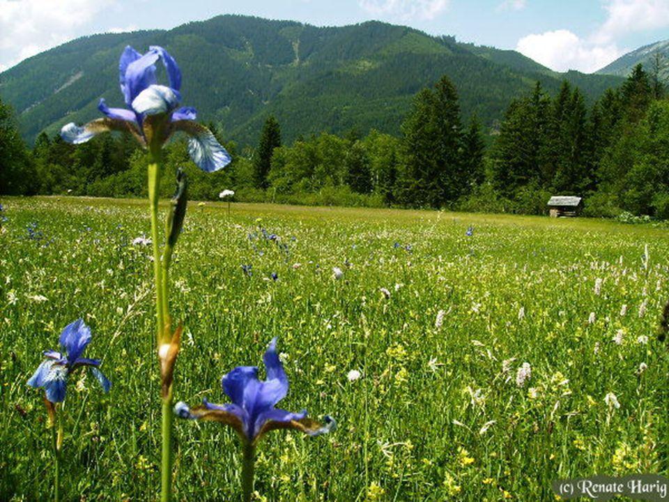 Ich wünsche Dir eine schöne FRÜHLINGSZEIT Herzlich Renate http://etaner-renateseckchen.blogspot.com Bilder und teilw.