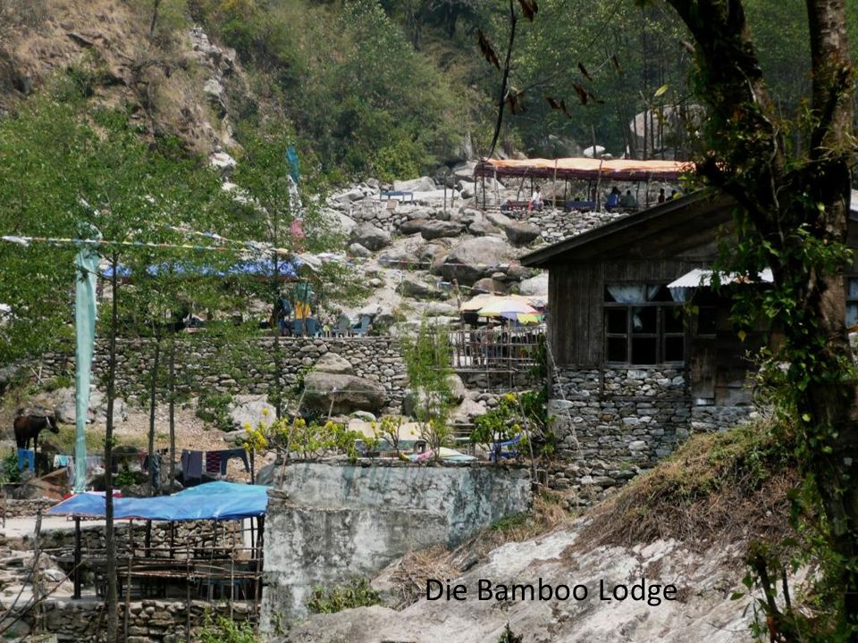 Die Bamboo Lodge