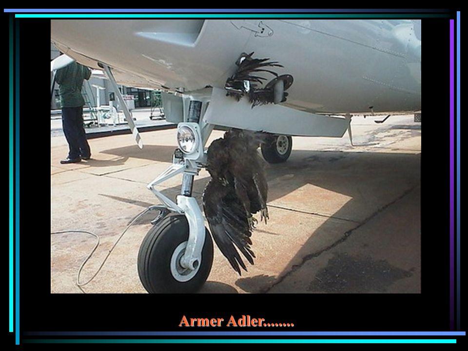 Armer Adler........