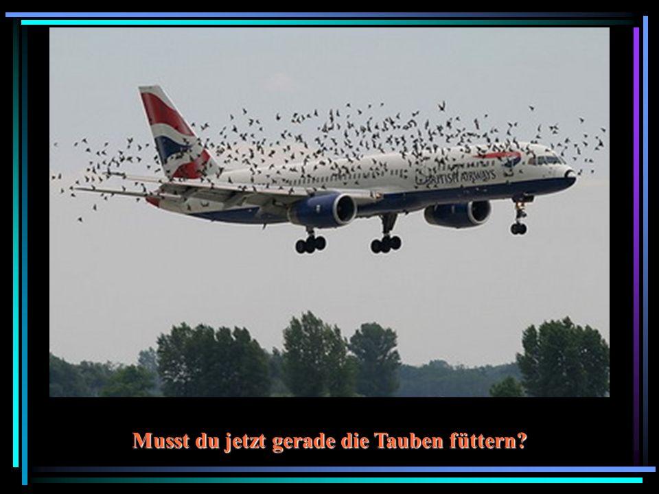 Musst du jetzt gerade die Tauben füttern
