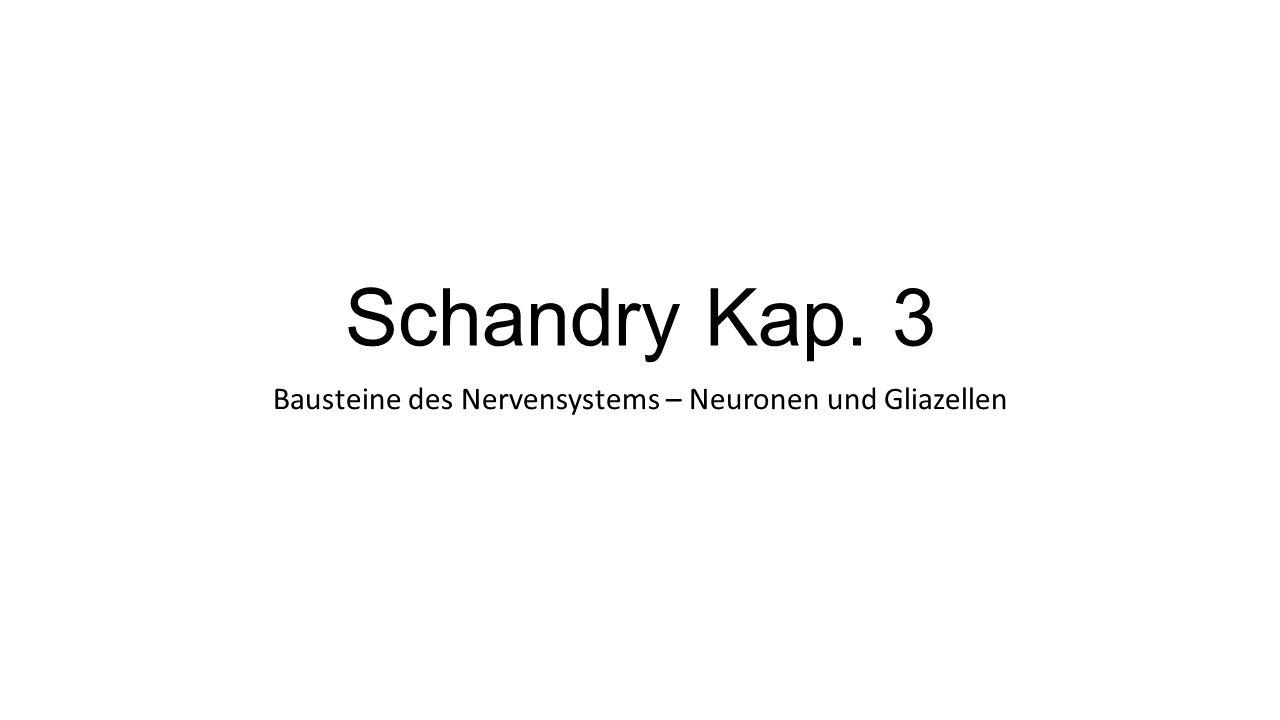 Schandry Kap. 3 Bausteine des Nervensystems – Neuronen und Gliazellen