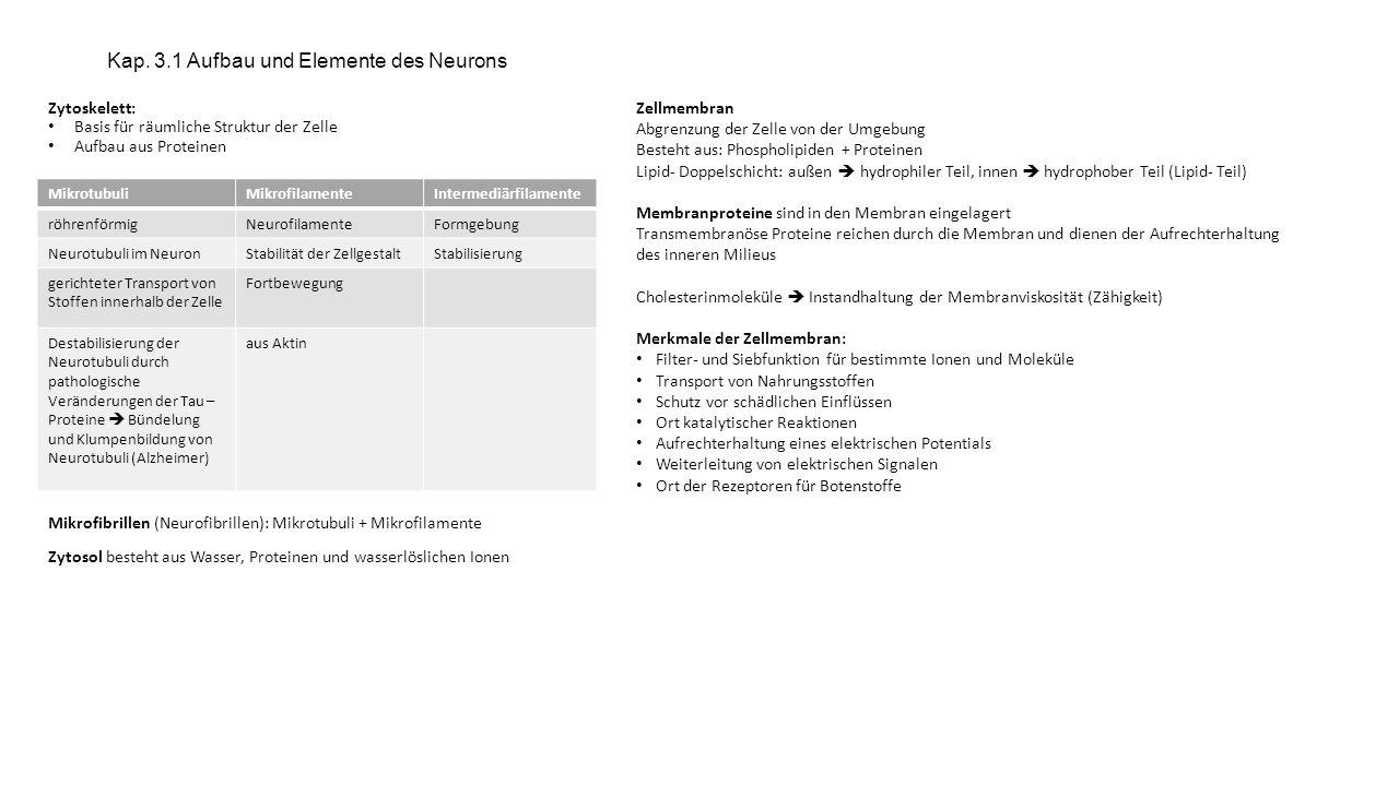 Kap. 3.1 Aufbau und Elemente des Neurons Zytoskelett: Basis für räumliche Struktur der Zelle Aufbau aus Proteinen Mikrofibrillen (Neurofibrillen): Mik