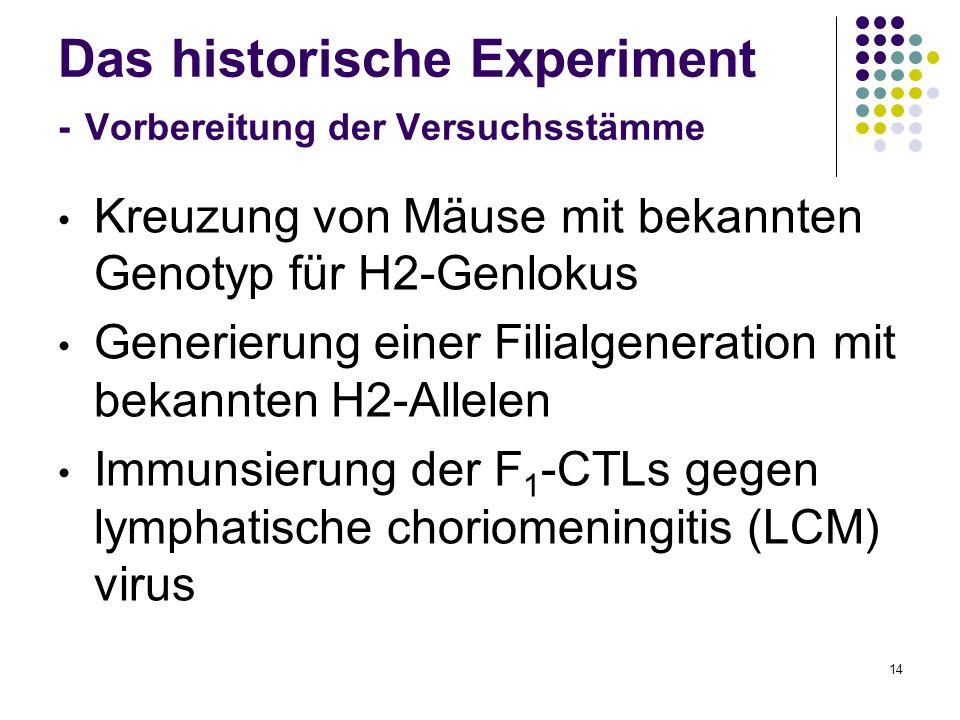 14 Das historische Experiment - Vorbereitung der Versuchsstämme Kreuzung von Mäuse mit bekannten Genotyp für H2-Genlokus Generierung einer Filialgener