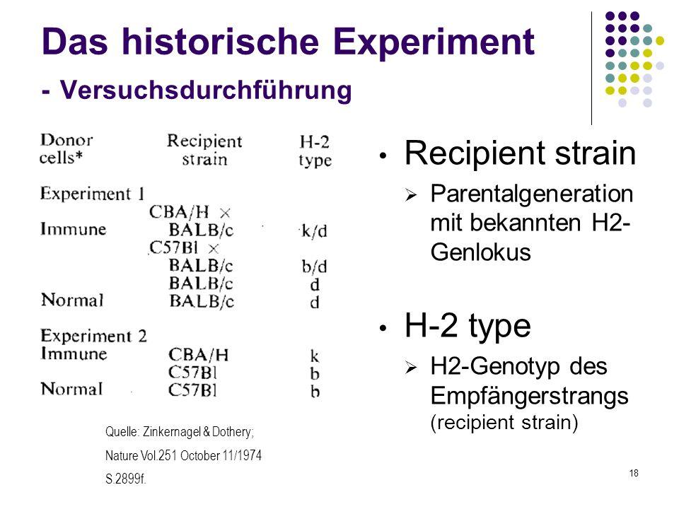 18 Das historische Experiment - Versuchsdurchführung Recipient strain Parentalgeneration mit bekannten H2- Genlokus H-2 type H2-Genotyp des Empfängers