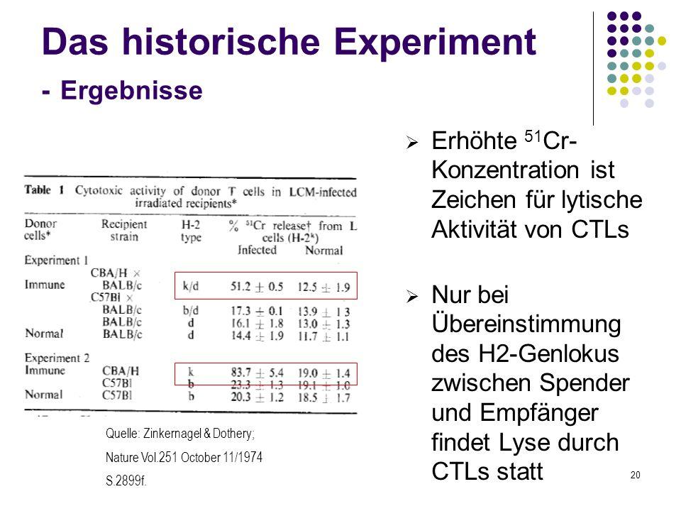 20 Das historische Experiment - Ergebnisse Erhöhte 51 Cr- Konzentration ist Zeichen für lytische Aktivität von CTLs Nur bei Übereinstimmung des H2-Gen
