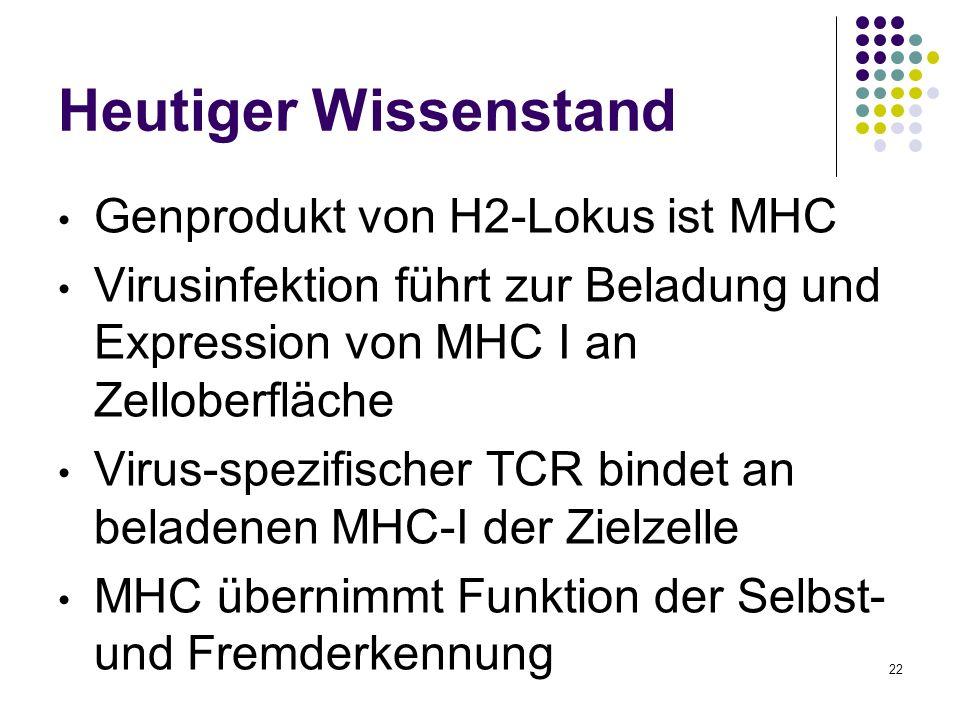 22 Heutiger Wissenstand Genprodukt von H2-Lokus ist MHC Virusinfektion führt zur Beladung und Expression von MHC I an Zelloberfläche Virus-spezifische
