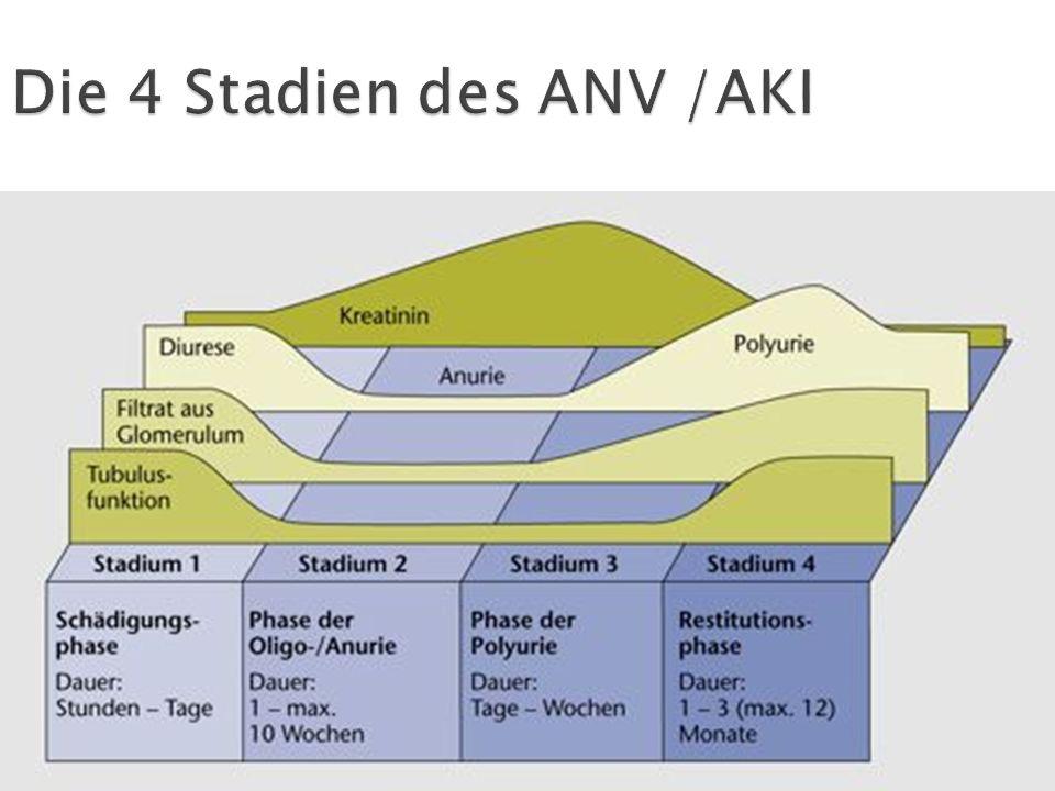 Die 4 Stadien des ANV /AKI