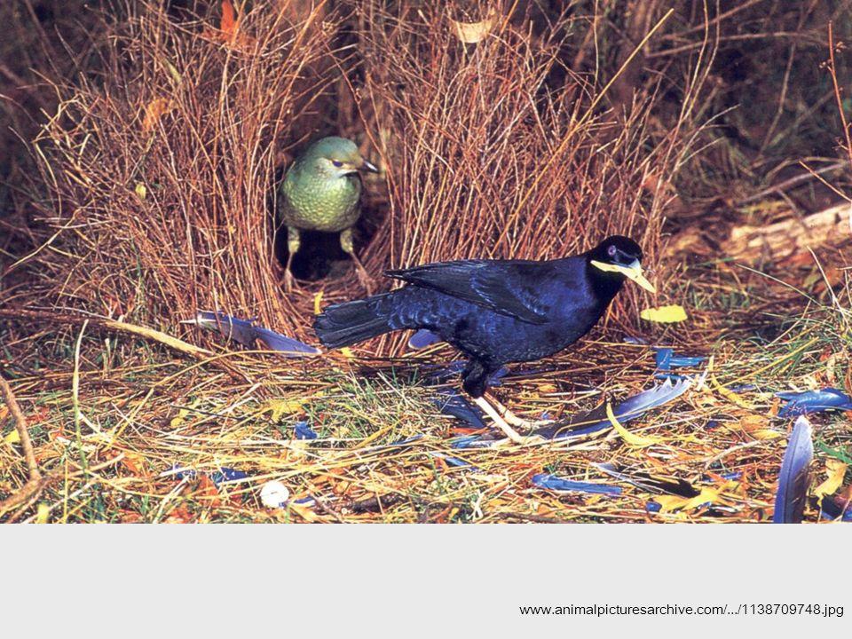 www.animalpicturesarchive.com/.../1138709748.jpg