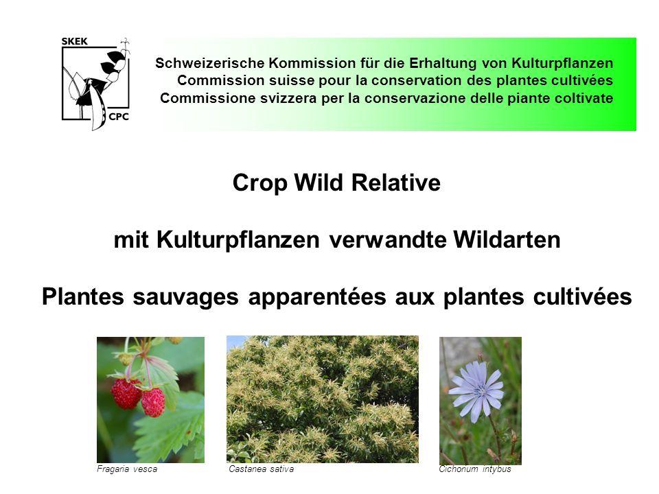 Schweizerische Kommission für die Erhaltung von Kulturpflanzen Commission suisse pour la conservation des plantes cultivées Commissione svizzera per l