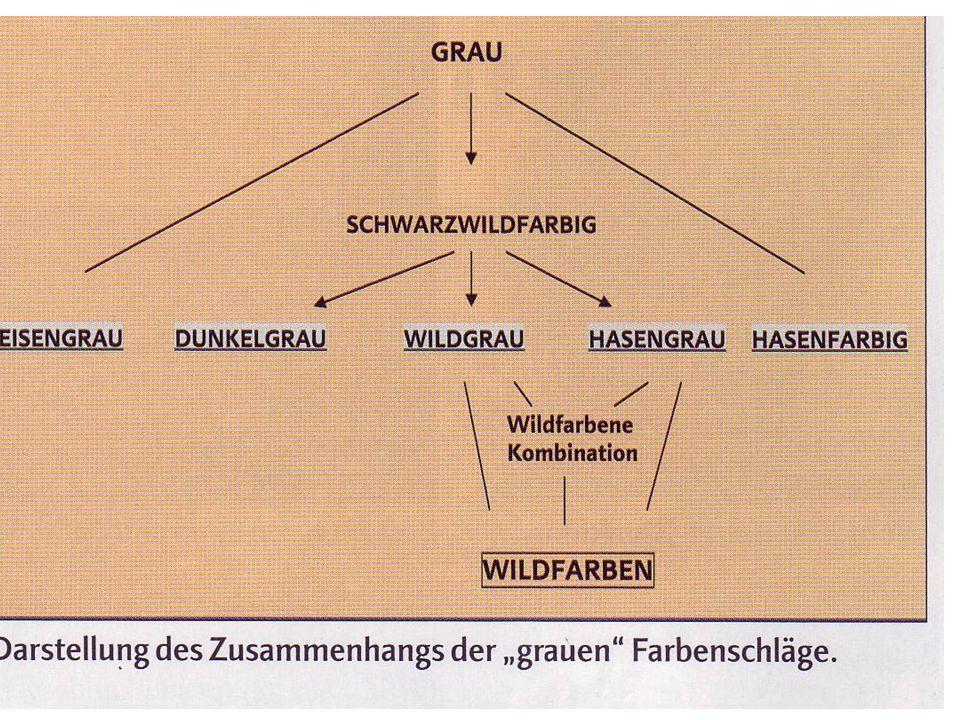 5. Zusammenfasung zum Oberbegriff Wildfarben