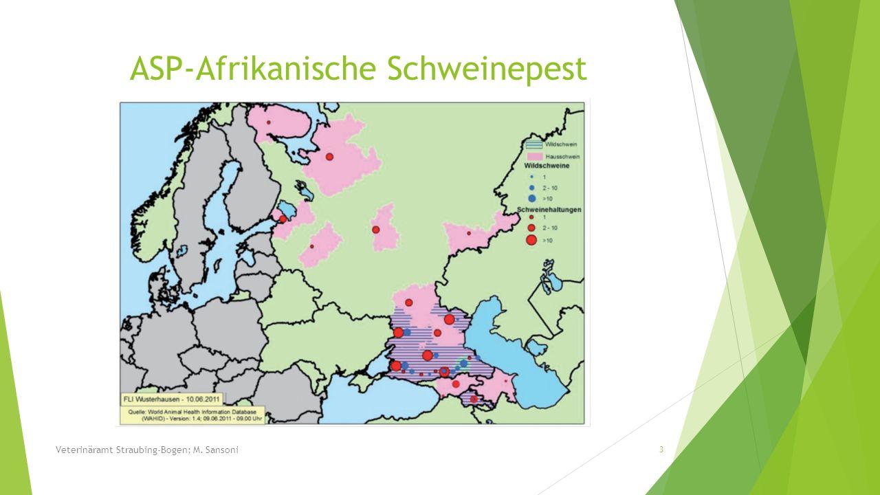 Veterinäramt Straubing-Bogen; M. Sansoni 14 ASP-Afrikanische Schweinepest