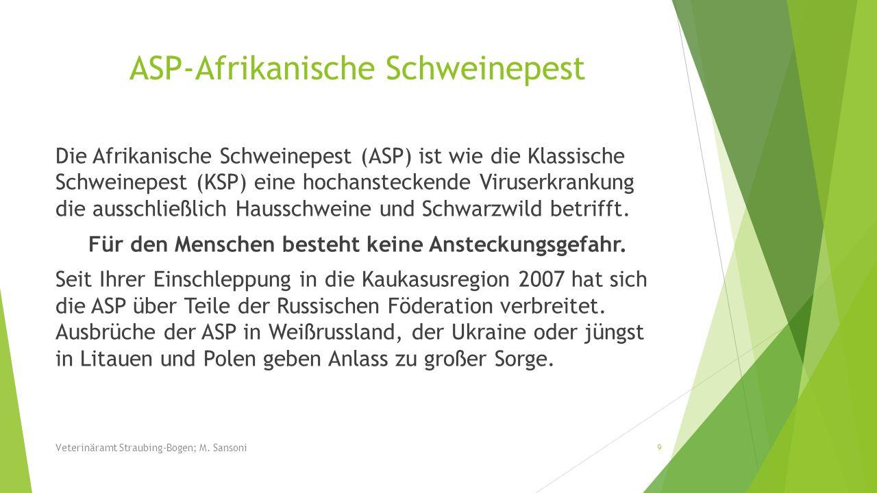 Die Afrikanische Schweinepest (ASP) ist wie die Klassische Schweinepest (KSP) eine hochansteckende Viruserkrankung die ausschließlich Hausschweine und