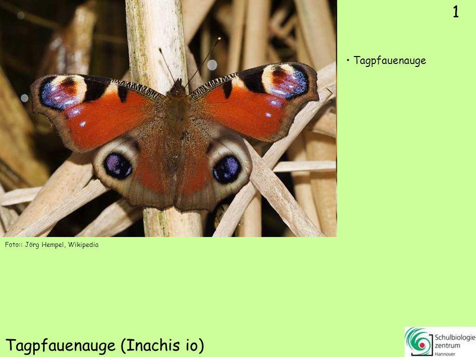1 Tagpfauenauge (Inachis io) Foto:: Jörg Hempel, Wikipedia Tagpfauenauge 1