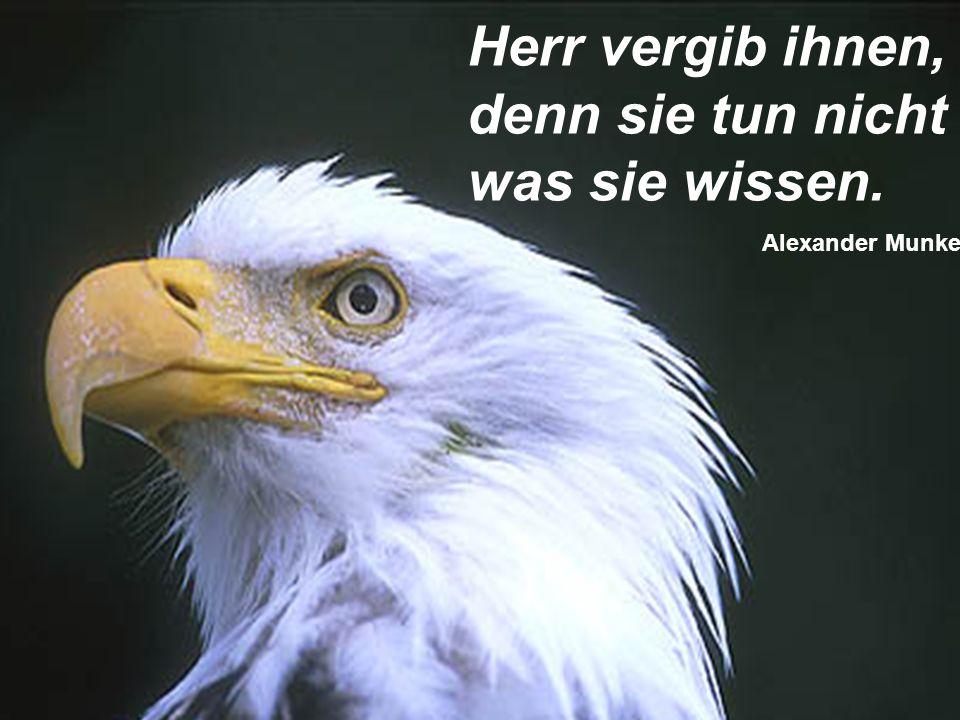Herr vergib ihnen, denn sie tun nicht was sie wissen. Alexander Munke