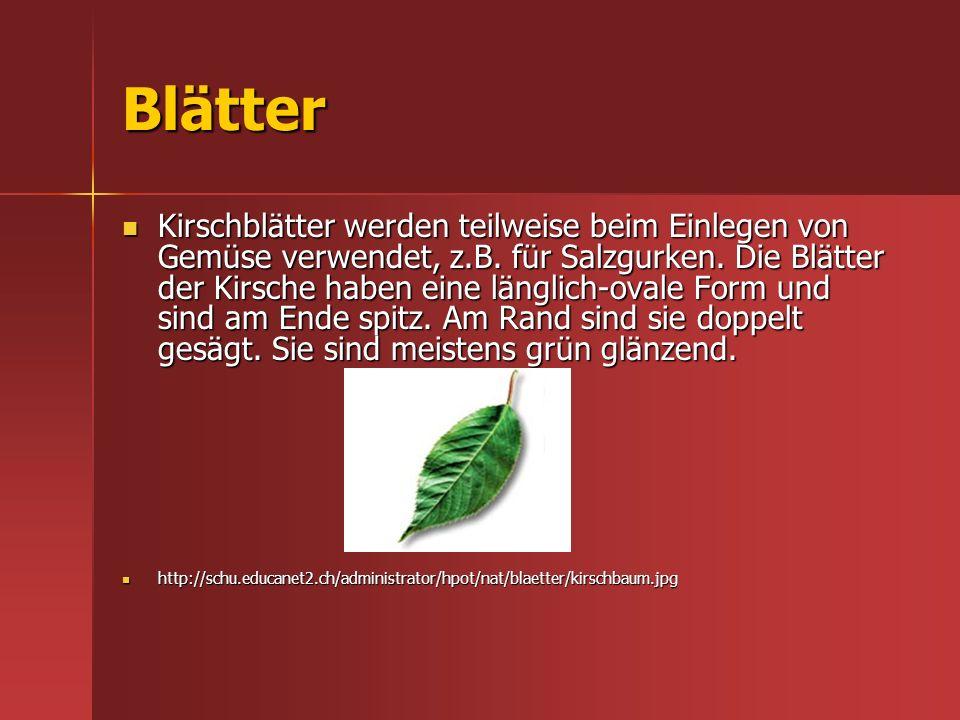 Blätter Kirschblätter werden teilweise beim Einlegen von Gemüse verwendet, z.B. für Salzgurken. Die Blätter der Kirsche haben eine länglich-ovale Form