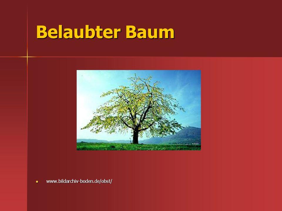 Belaubter Baum www.bildarchiv-boden.de/obst/ www.bildarchiv-boden.de/obst/