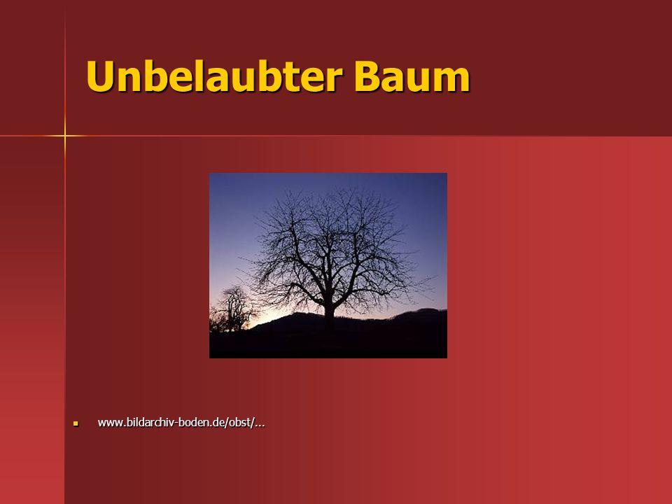 Unbelaubter Baum www.bildarchiv-boden.de/obst/... www.bildarchiv-boden.de/obst/...