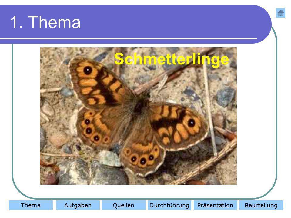ThemaAufgabenQuellenDurchführungBeurteilungPräsentation 1. Thema Schmetterlinge