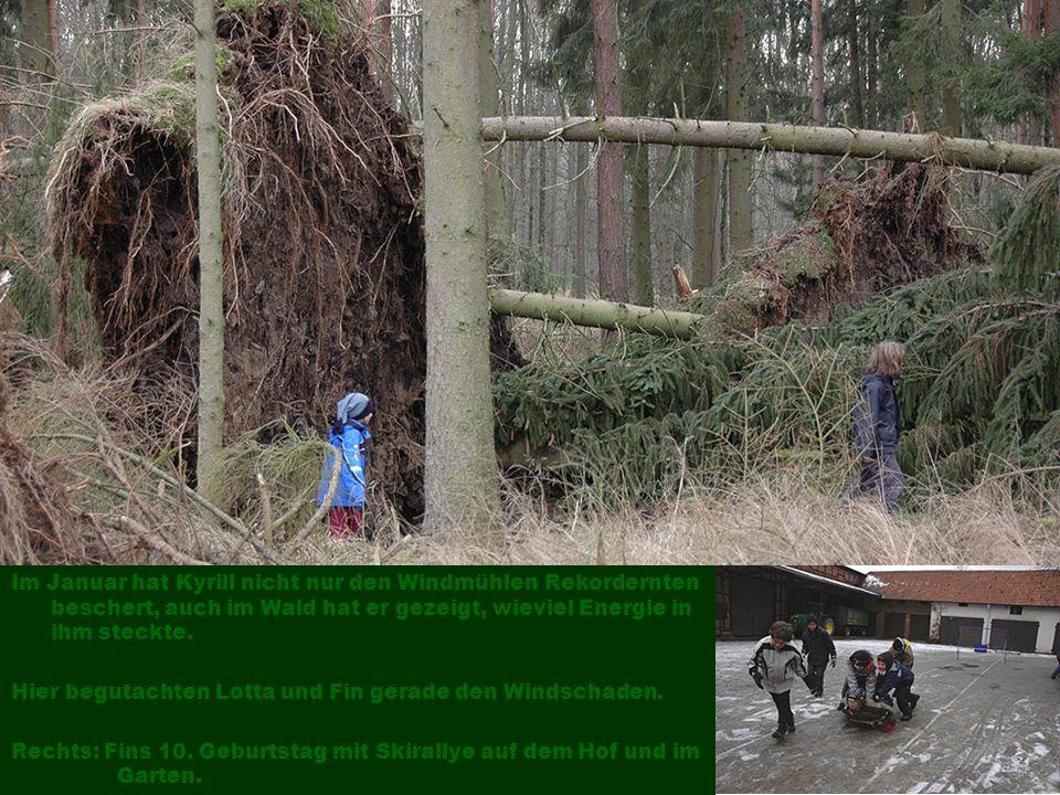 Im Januar hat Kyrill nicht nur den Windmühlen Rekordernten beschert, auch im Wald hat er gezeigt, wieviel Energie in ihm steckte.