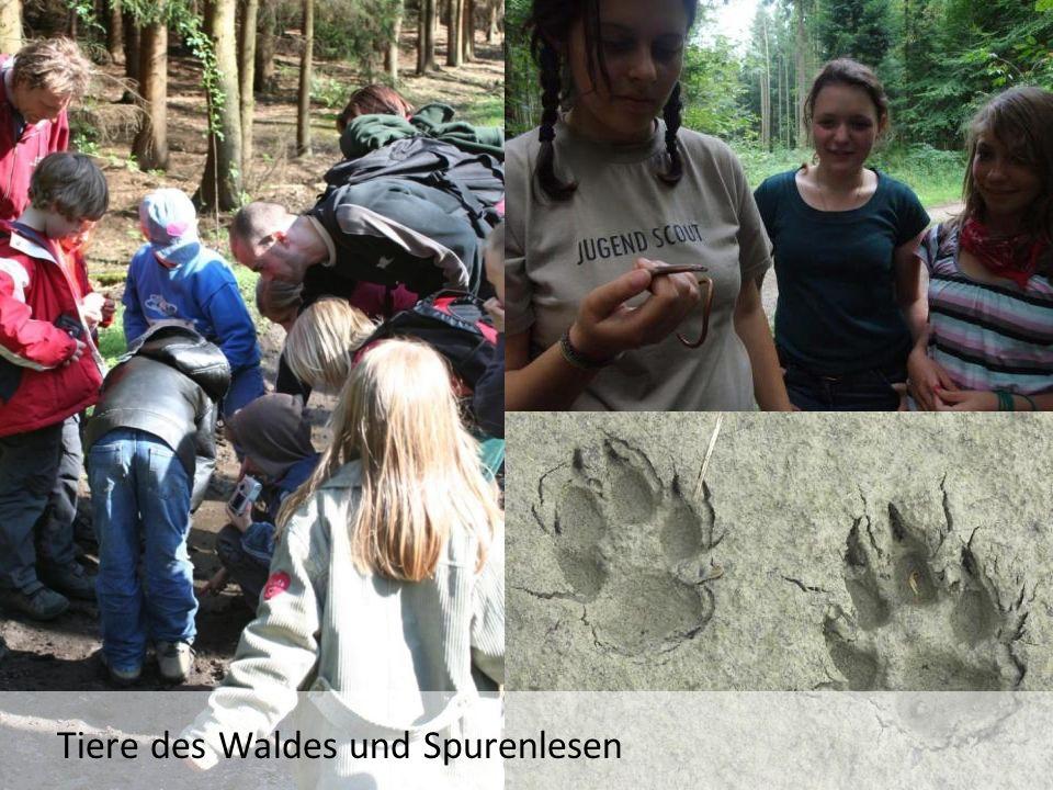 Tiere des Waldes und Spurenlesen