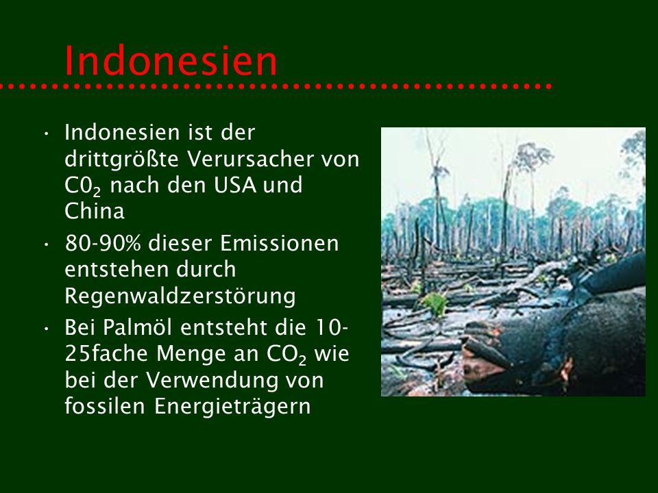 Indonesien Indonesien ist der drittgrößte Verursacher von C0 2 nach den USA und China 80-90% dieser Emissionen entstehen durch Regenwaldzerstörung Bei Palmöl entsteht die 10- 25fache Menge an CO 2 wie bei der Verwendung von fossilen Energieträgern