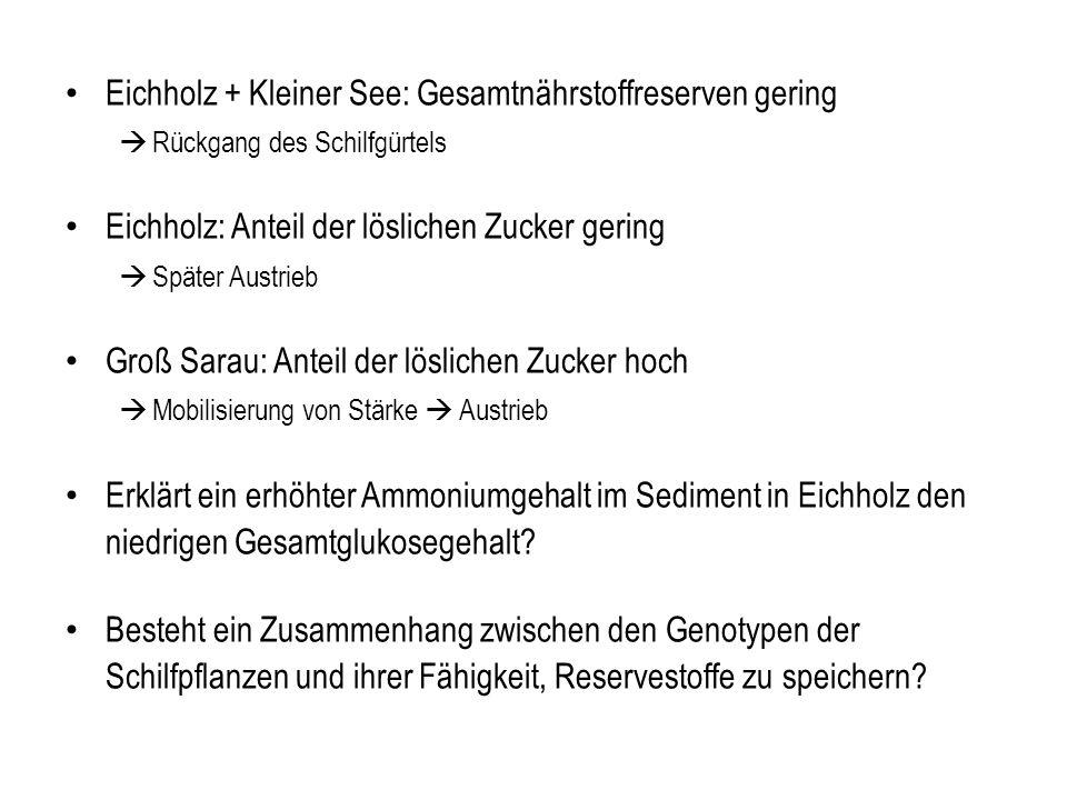 Eichholz + Kleiner See: Gesamtnährstoffreserven gering Rückgang des Schilfgürtels Eichholz: Anteil der löslichen Zucker gering Später Austrieb Groß Sa