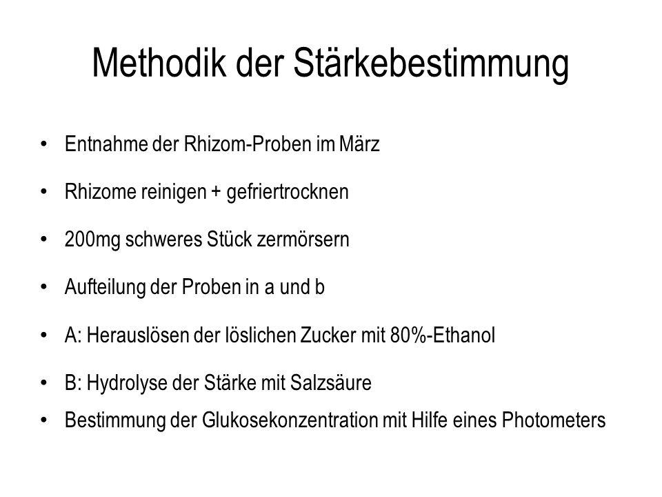 Methodik der Stärkebestimmung Entnahme der Rhizom-Proben im März Rhizome reinigen + gefriertrocknen 200mg schweres Stück zermörsern Aufteilung der Pro