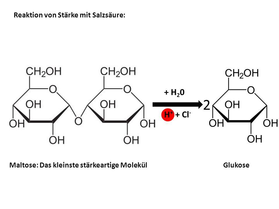 Reaktion von Stärke mit Salzsäure: Maltose: Das kleinste stärkeartige Molekül Glukose 2 + H 2 0 H + + Cl -