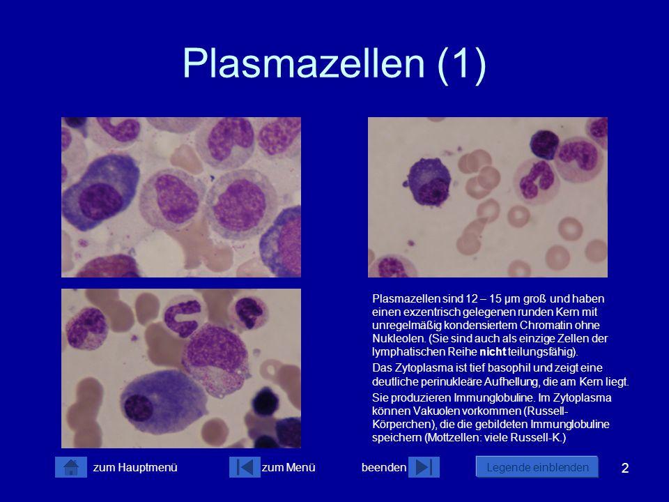 2 zum Menübeenden Legende einblenden zum Hauptmenü Plasmazellen (1) Plasmazellen sind 12 – 15 µm groß und haben einen exzentrisch gelegenen runden Ker